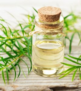 Tea Tree Oil For Hair Care in Hindi