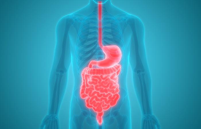 Benefits of eating sago for digestion
