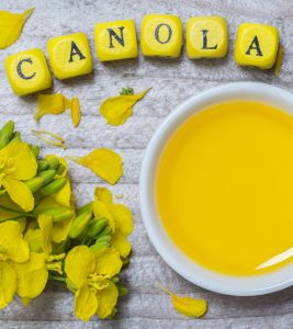 Canola Oil Benefits and Side Effects in Hindi