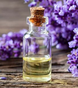 Lavender Oil Benefits, Uses and Side Effects in Hindi