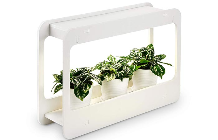 TORCHSTAR Plant Grow LED Light Kit