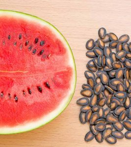 Watermelon Seed Benefits and Side Effects in Hindi