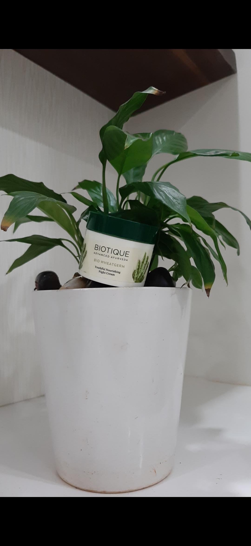 Biotique Bio Wheat Germ Youtheful Nourishing Night Cream-My favorite skincare product ever!-By itishaa-2
