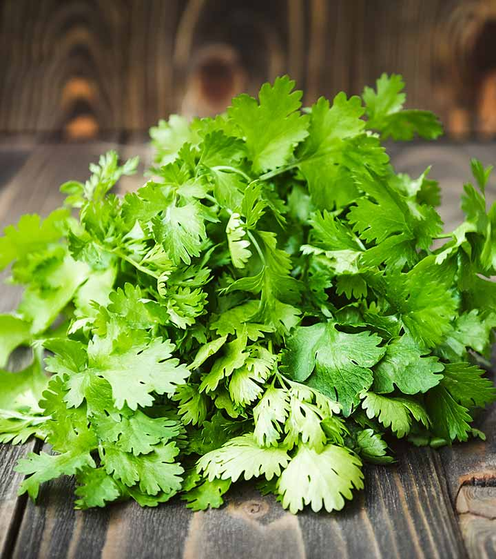 Coriander Leaves Benefits and Side Effects in Hindi