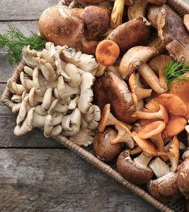 Mushroom Benefits, Uses and Side Effects in Hindi