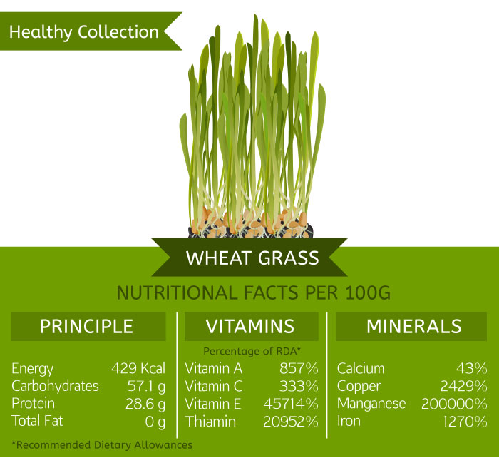 Levels of nutrients in wheatgrass