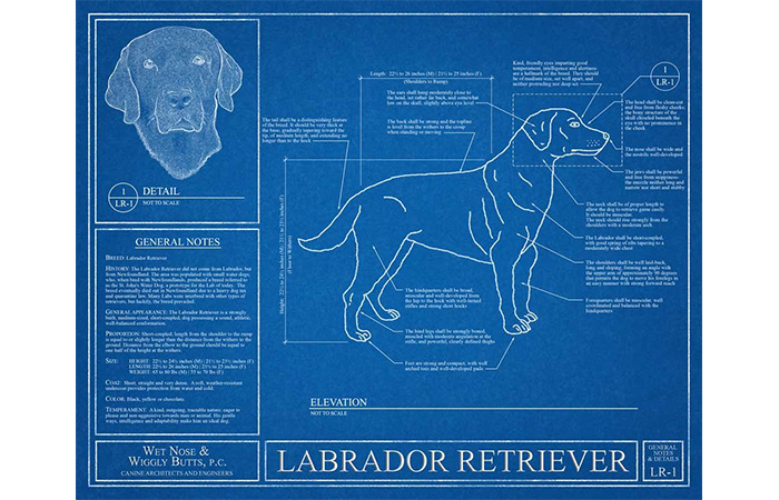 WetNoseWigglyButts Labrador Retriever Blueprint