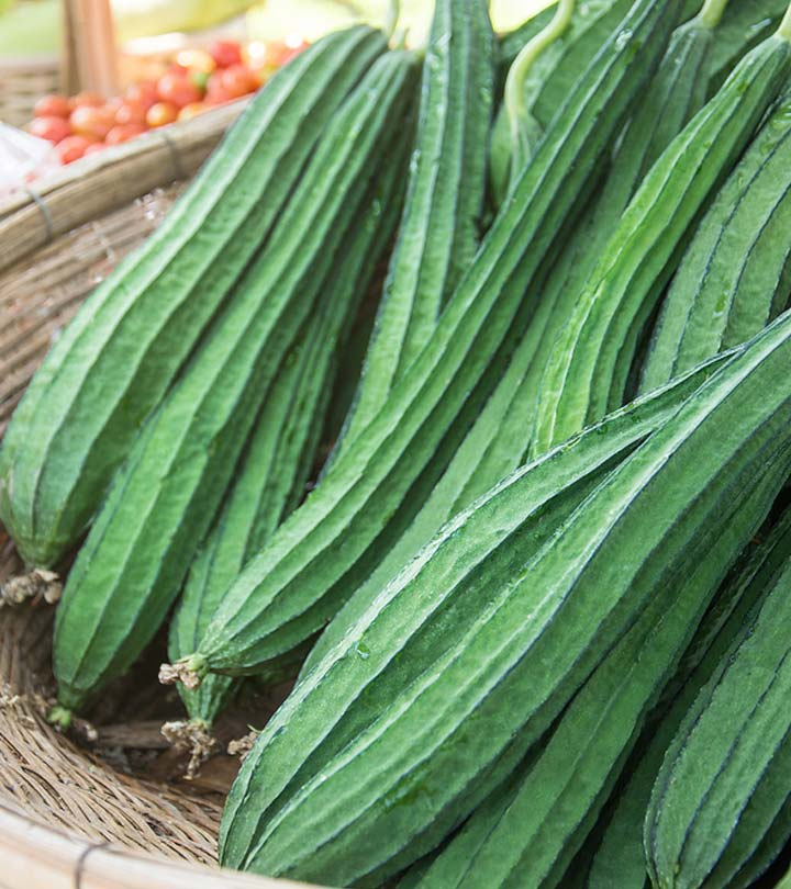 Ridge Gourd Benefits and Side Effects in Bengali