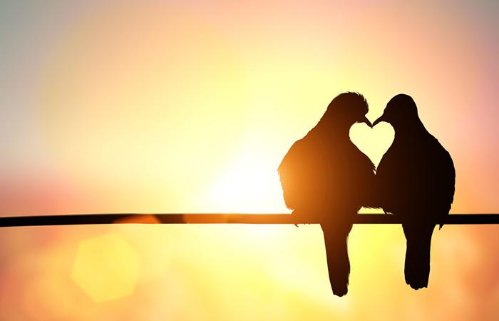 silhouette-bird-heart-shape-on-pastel