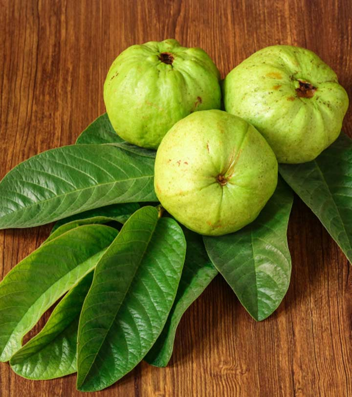 Guava Leaves Benefits and Side Effects in Bengali