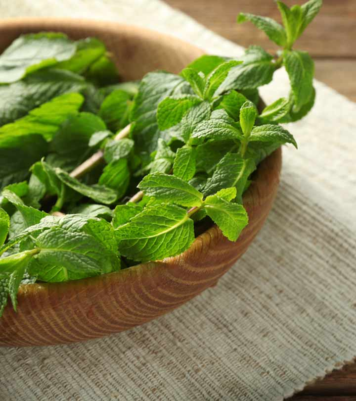 Lemon Balm Benefits, Uses and Side Effects in Bengali