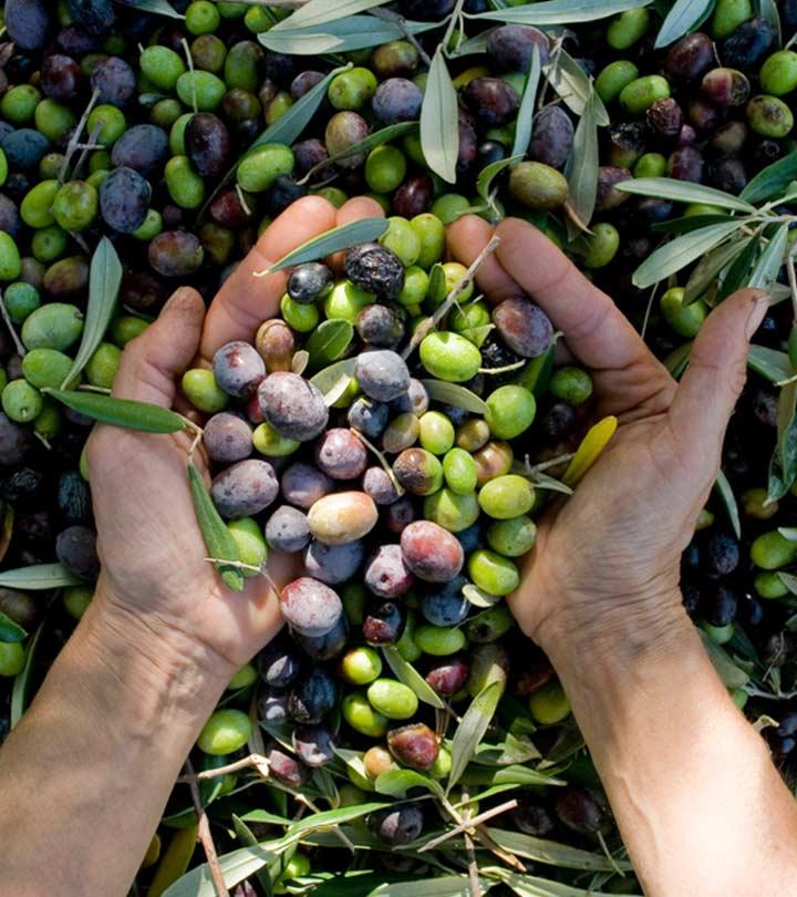 জলপাইয়ের উপকারীতা, ব্যবহার এবং পার্শ্ব প্রতিক্রিয়া | Olive (Jaitun) Benefits, Uses and Side Effects