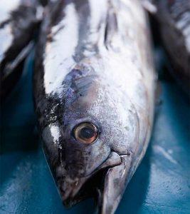 Tuna Fish Benefits and Side Effects in Hindi