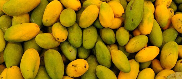 Dasheri Mangoes Uttar Pradesh