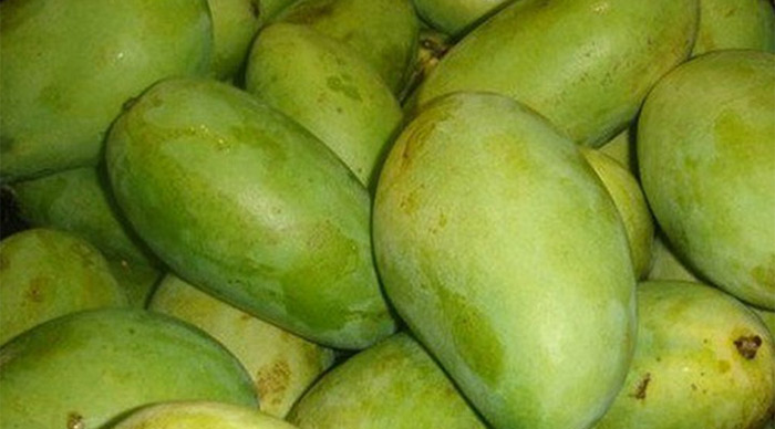 Fazli Mangoes West Bengal