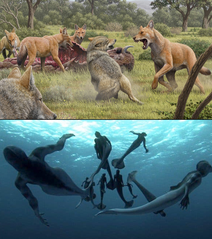 7 Mythical Creatures That Actually Might Have Existed