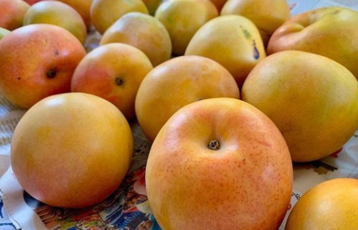 Rumani Mangoes Tamil Nadu