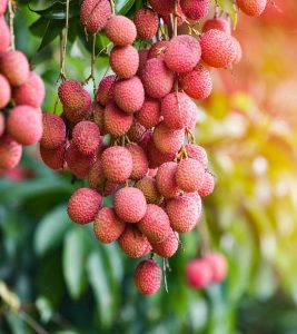 Litchis (Lychees) Benefits and Side Effects in Hindi