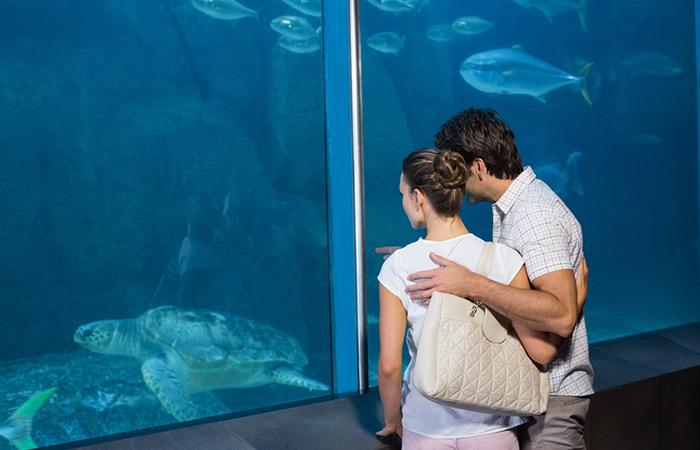 Head To The Aquarium