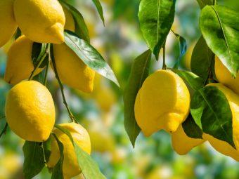 Benefits Of Lemon Leaves