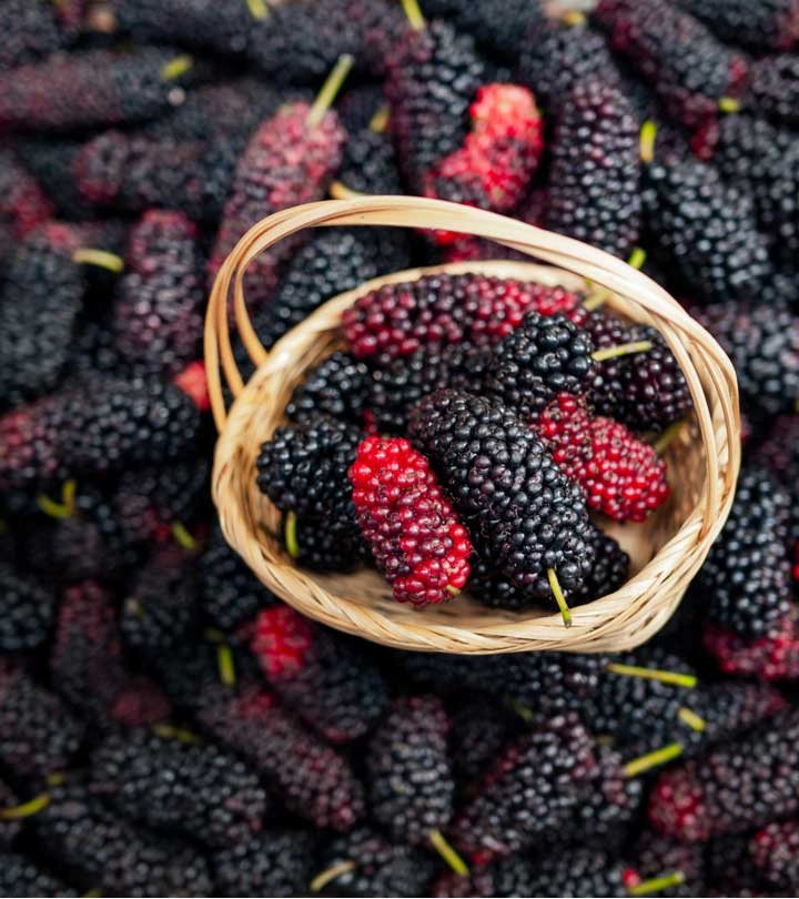 शहतूत के फायदे, उपयोग और नुकसान – Mulberry Benefits, Uses and Side Effects in Hindi