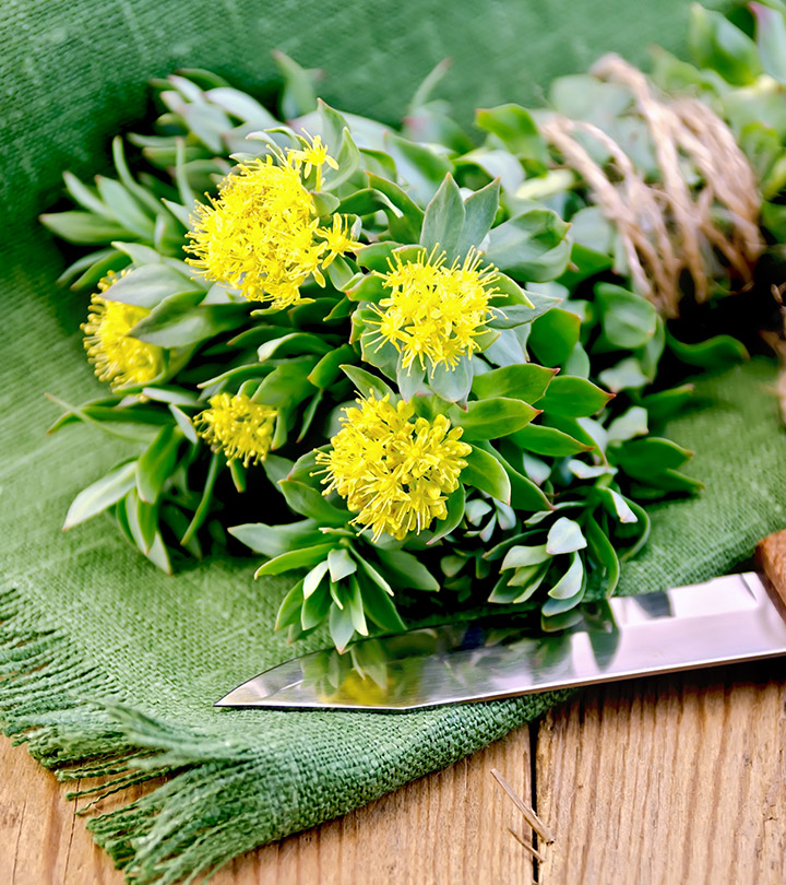 Top 7 Health Benefits Of Rhodiola Rosea You Didn't Know About